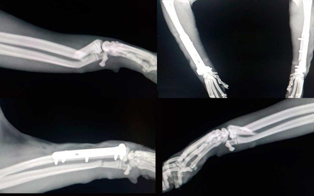 Cirugia veterinaria en Irun con Irunvet