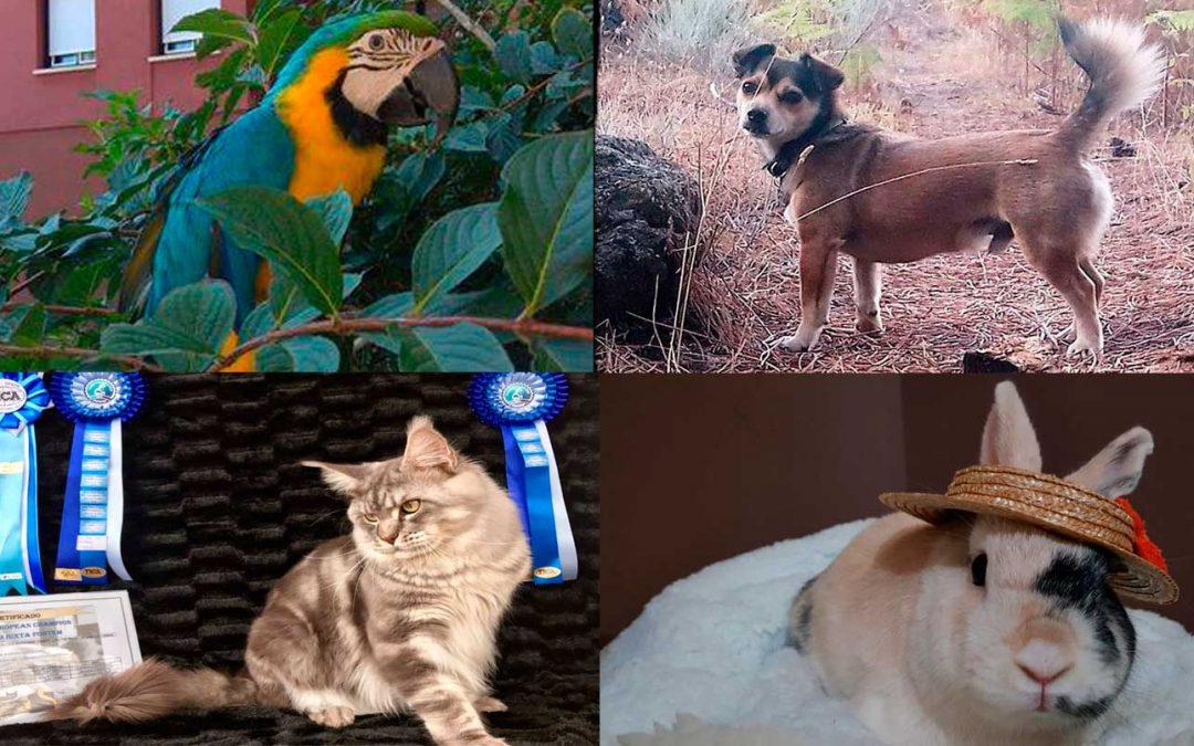 Irunvet concurso fotografico de animales