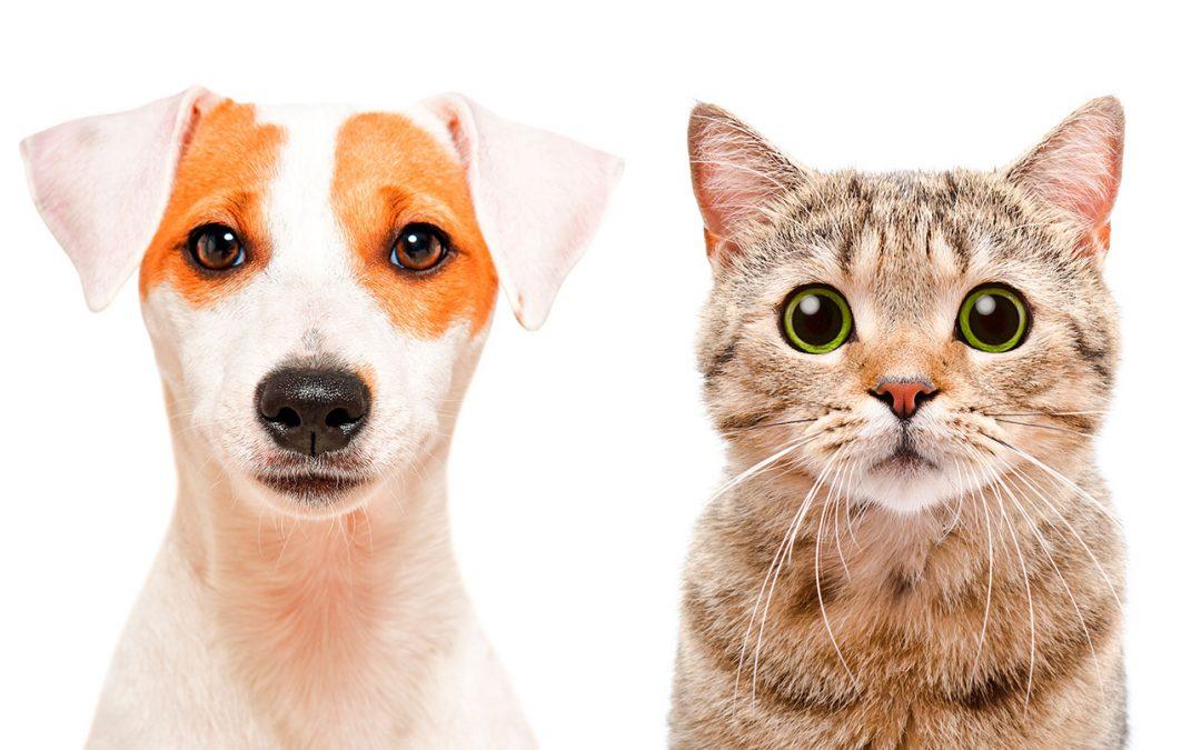 Diario de perros y gatos, ¿en qué se diferencian?