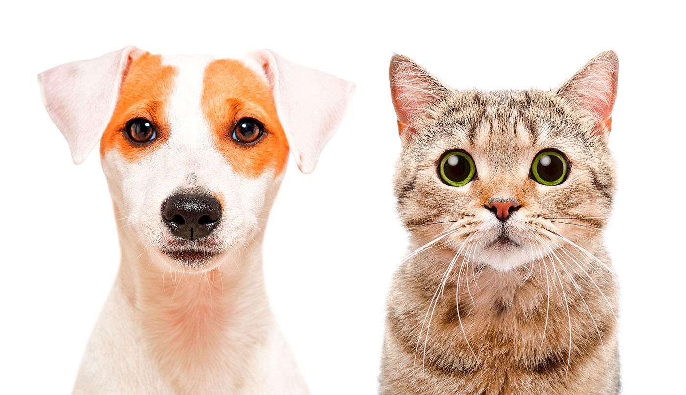 Para mantener a su mascota feliz y saludable, IrunVet Veterinarios