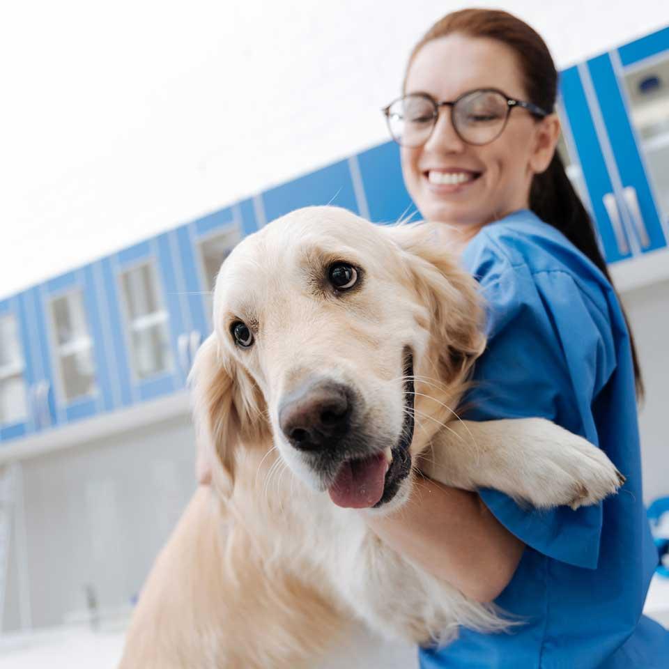 Servicios veterinarios para proporcionar a su mascota la mejor atención veterinaria