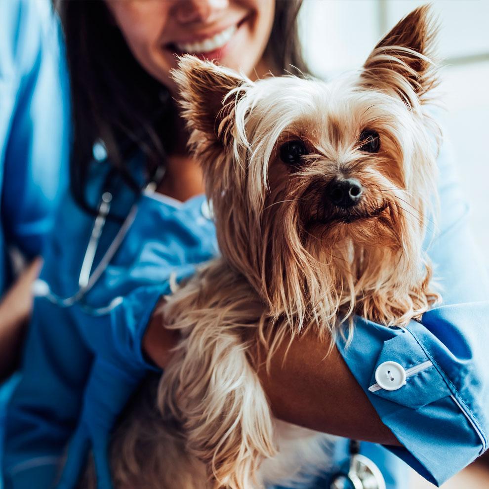 IrunVet expertos en la salud de las mascotas y ofrecemos asesoramiento