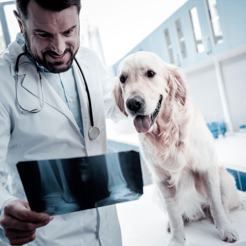 IrunVet veterinarios para examinar a tu mascota, proporcionarle primeros auxilios y vacunarlo contra enfermedades comunes